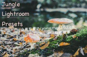 Lightroom预设 摄影调色滤镜