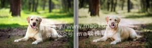 Lightroom预设 动物摄影滤镜