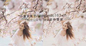 20种粉色浪漫色调照片调色luts预设